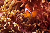 Al Fahal reef