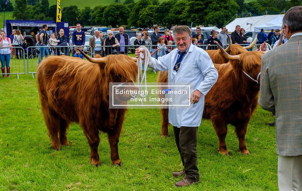 Biggar, South Lanarkshire, Scotland 23 July 2016<br /> Highland cattle in the show ring<br /> <br /> (c) Andrew Wilson | Edinburgh Elite media