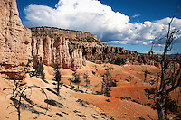 If you love hiking, the Tower Trail is a &quot;must&quot; when visiting Bryce Canyon.<br /> <br /> The scenery is breathtaking and unique to most hikers.<br /> <br /> Unlike the multitude of towers that one sees from the rim, here you experience a real desert landscape.<br /> <br /> If you endure till the end, you will be rewarded by a cluster of trees to shelter yourself, as you gaze upon the sandstone arch or bridge before you.