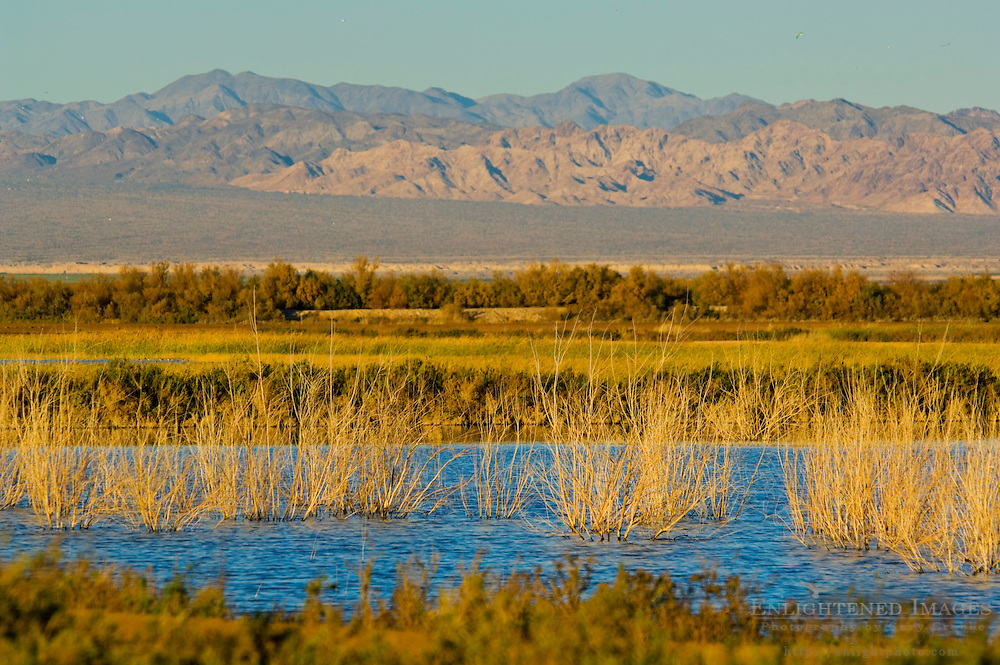 Sunset light at wetlands near the Salton Sea, Imperial Valley, California