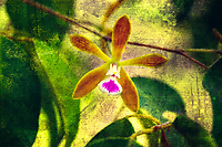 A gritty artistic look at Encyclia tampesis - the butterfly orchid - with lots of texture, color, and a sprinkling of grime.
