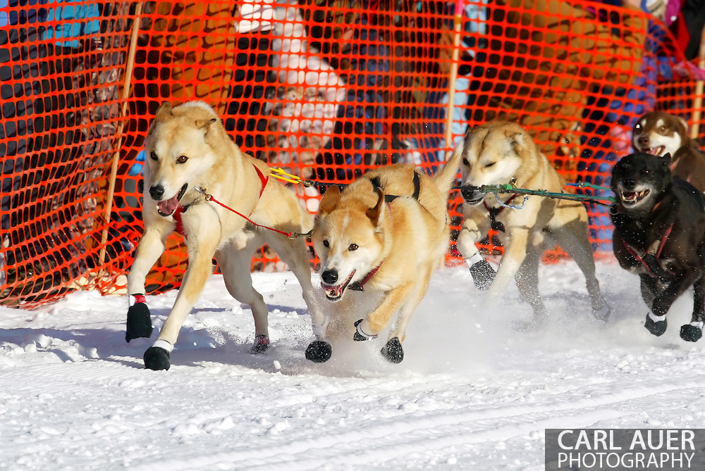 3/4/2007:  Willow, Alaska -  The lead dogs take the team of Veteran Perry Solmonson of Plain, WA out of the start gate for the 1049 mile trek from Willow to Nome during the official restart of the 35th Iditarod Sled Dog Race
