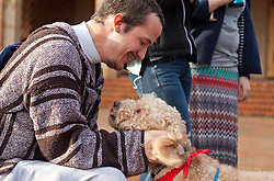 Fozzie Bear, a Golden Doodle therapy dog visiting campus to help take away stress for leading into finals week at PLU on Friday, Dec. 12, 2014. (Photo/John Froschauer)