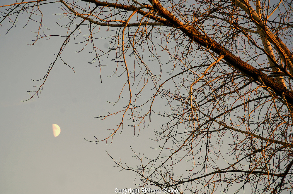 Tree with moon