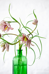 Fritillary in green glass poison bottle