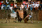MEXICO, SPORTS, YUCATAN small town bullfight during festival