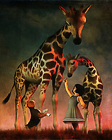 There is a sense of adventure to this piece that captivates the viewer from the very beginning. Here, we find Amy and Buddy the beagle on an adventure. We don't actually know where they are, but it's clear that this adventure has taken a turn for the extraordinary. Amy and Buddy have found some giraffes. From the first glance, it looks as though everyone is on their way to becoming fast friends. The sheer size difference between Amy and Buddy and the giraffes can be overwhelming. Yet from the detail in this gorgeous painting, available as wall art, t-shirts, or as interior products, we can see these giraffes are truly gentle, beautiful giants.