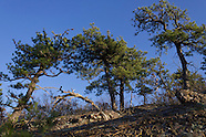2012 November Schunnemunk Mountain Hike