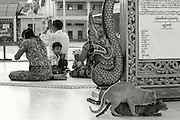 A Burmese family prays while, in the foreground, two cats mate at the Botataung Paya. The paya is named after the 1000 military leaders who escorted relics of the Buddha from India to Myanmar more than 2000 years ago.