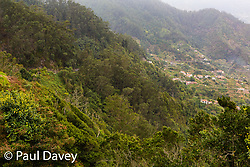 The flora of the North East of Madeira is influenced by the moist air of the Atlantic, creating dense almost rainforest conditions where deciduous fruits and plants thrive. MADEIRA, September 25 2018. © Paul Davey