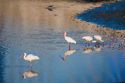 Birds in pond beneath Margaret Hunt Hill Bridge over the Trinity River, Dallas, Texas, USA.
