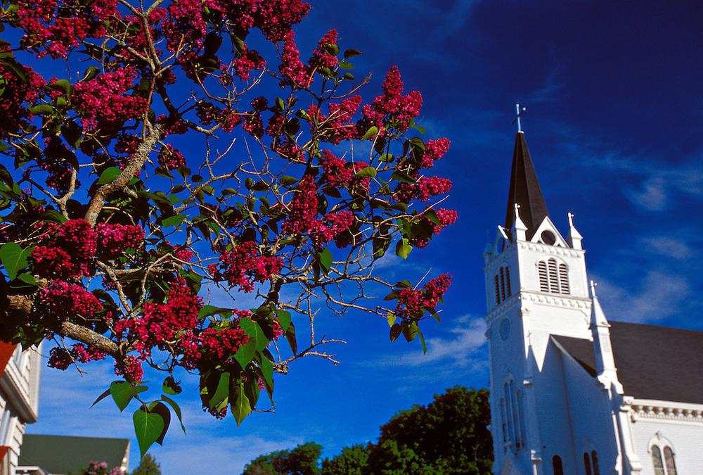 A CHURCH AND BLOOMING LILACS AT MACKINAC ISLAND, MICHIGAN.