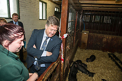 Pictured: Keith Brown visits some six week old piglets<br /> <br /> Cabinet Secretary for Economy, Jobs & Fair Work Keith Brown visited Gorgie City Farm today  to mark their accreditation as the 800th Living Wage employer in Scotland. Mr Brown met Josiah Lockhart, CEO and undertook a short tour of the farm, celebrating their accreditation and promoting the Living Wage more generally. The Scottish Government has set a target of reaching 1,000 Scottish-based Living Wage Accredited Employers by autumn 2017. While at the farm Mr Brown met Maia Gordon, Kirsty McGoff (17) and Zoe White (18), who have benefited from the living wage, and George Ellis, chair of the farm's board of directors<br /> Ger Harley | EEm 18 May 2017