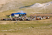 Israel, Negev Desert, Bedouin tent surrounded by a herd of sheep