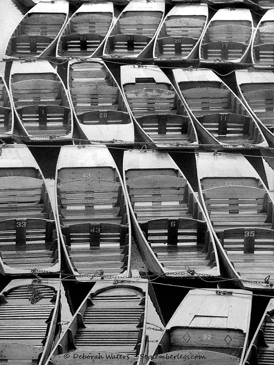 Punts moored on the River Thames zigzagging gently, straining against their mooring, View from Magdalen Bridge, Oxford, UK