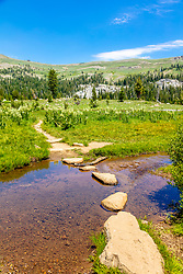 """Pacific Crest Trail 2""- Photograph of the Pacific Crest Trail at Lower Castle Creek in the Tahoe area back country."