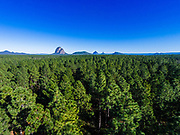 Aerial photograph of pine trees in State Forest tree farms & Glasshouse Mountains, Sunshine Coast, Queensland, Australia