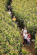 20080904 Corn Maze