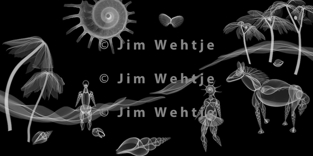 X-ray image of a shore scene (white on black) by Jim Wehtje, specialist in x-ray art and design images.