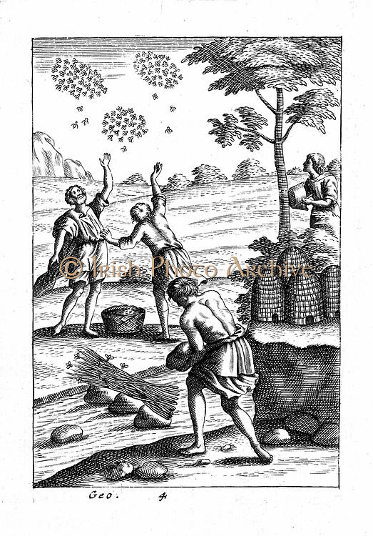 Beekeeping showing beekeepers preparing to take a swarm. At bottom of tree are straw beehives (skeps) used in the apiary. From 18th century edition of Virgil 'Georgics' which followed the agricultural traditions set down by Virgil in Roman times. Copperplate engraving.