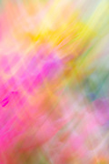 Abstract of bouquet flowers as a result of panning (motions study).