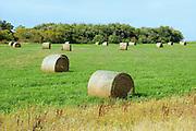 Alfalfa bales<br /> Yellow Grass<br /> Saskatchewan<br /> Canada