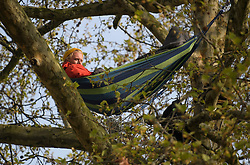 © Licensed to London News Pictures. 18/04/2019. London, UK. An Extinction Rebellion campaigner hangs from a hammock, high up in a tree, outside the Supreme Court on Parliament Square in London on a fourth day of protests by the group. Protesters are demanding urgent government action on climate change. Photo credit: Ben Cawthra/LNP