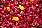 Bright coloured red peppers - pimentos - with contrast of yellow peppers at food market in Sicily, Italy