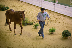 Laercio Casalecchi Filho, (BRA), He s A Quastion QR - Horse Inspection Reining  - Alltech FEI World Equestrian Games™ 2014 - Normandy, France.<br /> © Hippo Foto Team - Dirk Caremans<br /> 25/06/14
