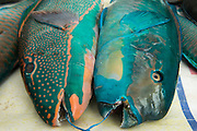 Parrotfish<br /> Reef Species for sale<br /> Suva Sea Food Market<br /> Suva<br /> Viti Levu<br /> Fiji. <br /> South Pacific