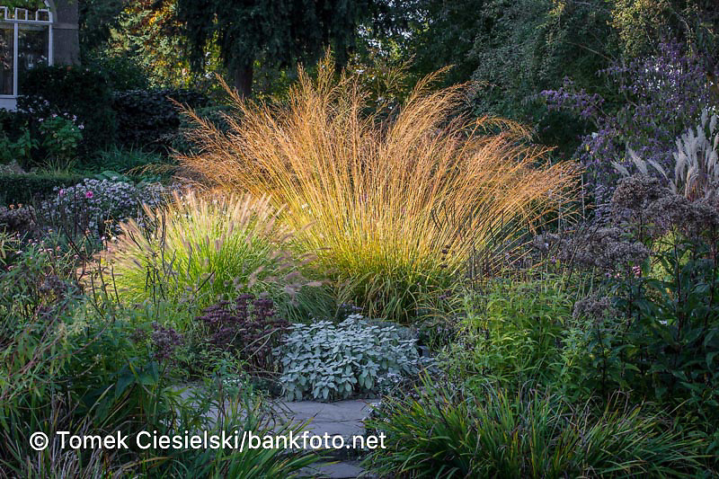 Autumnale ornamental grass composition
