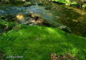 Tall Timbers, Swift Run Creek, State Forest, Mifflin Co. PA