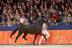 329, Kaygo<br /> KWPN Stallionshow - 's Hertogenbosch 2018<br /> © Hippo Foto - Dirk Caremans<br /> 03/02/2018