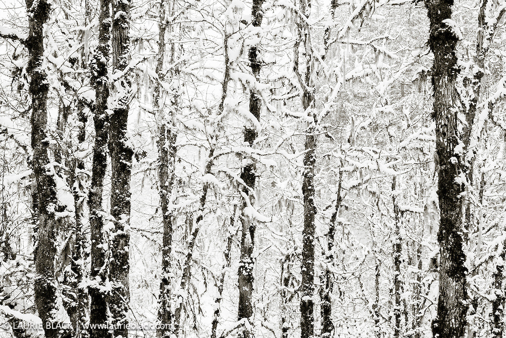 B&W winter landscape fine art photo 8