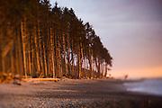 Beach and coastal forest