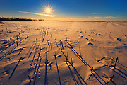 Stubble at sunrise in winter<br />Anola<br />Manitoba<br />Canada
