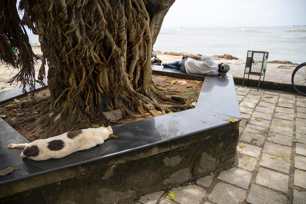 KOCHI, INDIA - 3rd September 2019 - A man and a street dog both lie-down and take an afternoon nap under a banyan tree during high temperatures. Fort Kochi, Cochin, Kerala, Southern India