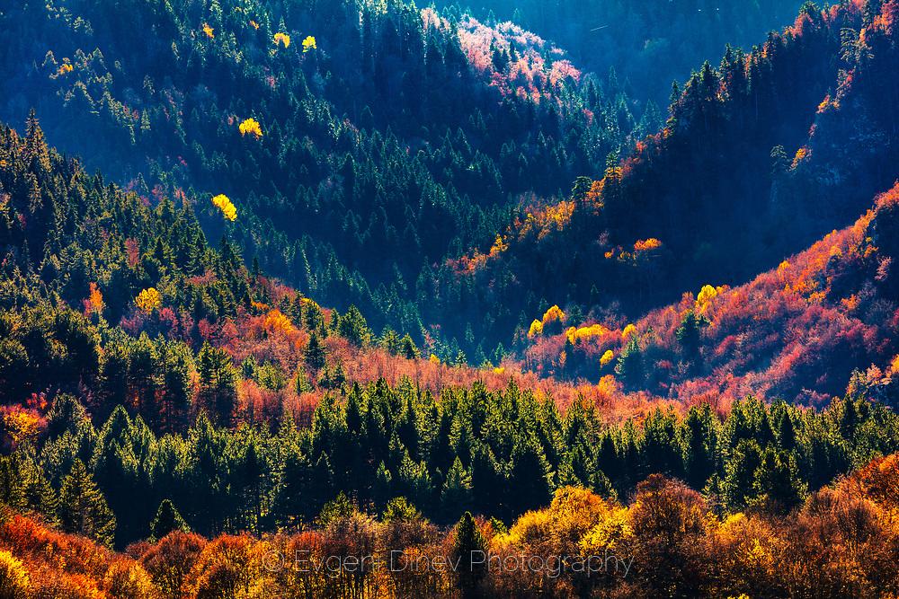 Devin factory Autumn time around Devin