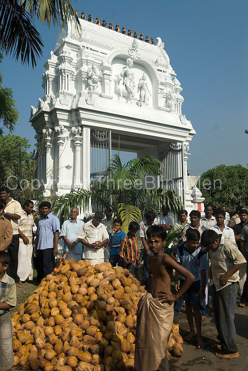 Th entrance gate in white. A pile of blessed coconuts, washed in turmeric. The Vel cart procession will soon arrive, and all these coconuts will be smashed and broken in front of the cart. Coconut water flies everyhere accompanied by the sound of breaking nuts.