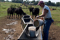John Stuedemann's helper feeds cattle in Comer, Ga. on Monday, Sept. 25, 2006. Stuedemann says he applies techniques with his cattle that he has learned since childhood in Iowa, such as positive reinforcement, minimal occurrences of pain or fear, and calm motions and speech.
