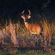 Oklahoma Wildlife Photographer