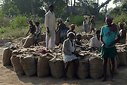 Men seated on sacks of rice. Harvest season, Tamil Nadu.