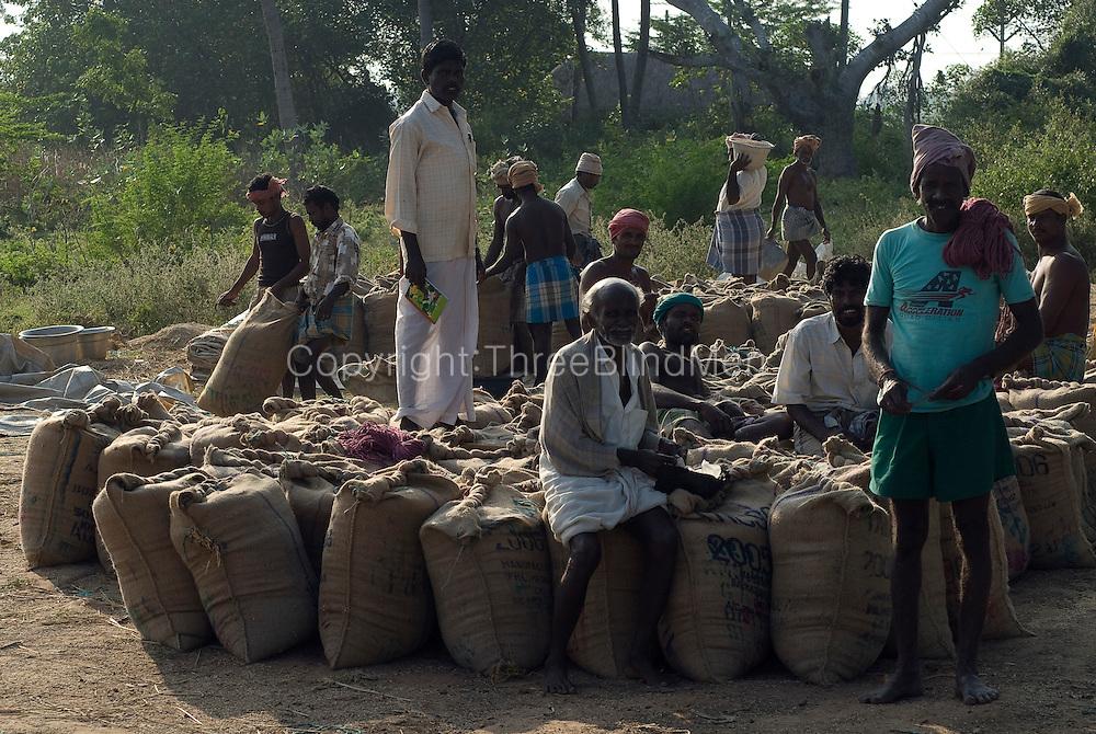 Men seated on sacks of rice. Harvest season, Tamil Nadu.