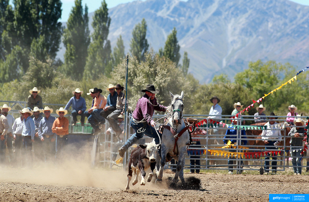 Anthony Perkins from Middlemarch in action during the Open Rope and Tie at the Wanaka Rodeo. Wanaka, South Island, New Zealand. 2nd January 2012
