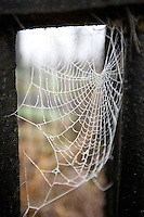 beauty, beauty in nature, pattern, day, delicate, design, dew, frost, cold, winter, seasons, drop, nobody, outdoors, spiderweb, the natural world, travel, web, wet, Kells, County Meath, Ireland, spider, close-up view