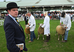 © Licensed to London News Pictures. <br /> 08/07/2014. <br /> <br /> Harrogate, United Kingdom<br /> <br /> Sheep are judged in one of the arenas during the first day of the Great Yorkshire Show. The show is England's Premier Agricultural Event and is based on the 250-acre Great Yorkshire Showground near Harrogate. The Main Ring is the hub of the Show providing a setting for international show jumping and world class cattle parade. The showground is filled with animals, country demonstrations, have-a-go activities and rural crafts.<br /> <br /> Photo credit : Ian Forsyth/LNP
