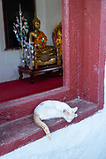A cat sleeps on a window sill of the small temple atop  Mount Phousi, Luang Prabang, Laos.