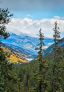 Colorado Aspens in Fall