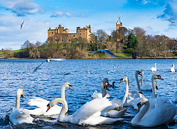 View of Linlithgow Palace in Linlithgow, West Lothian, Scotland, UK. Birthplace of Mary Queen of Scots.