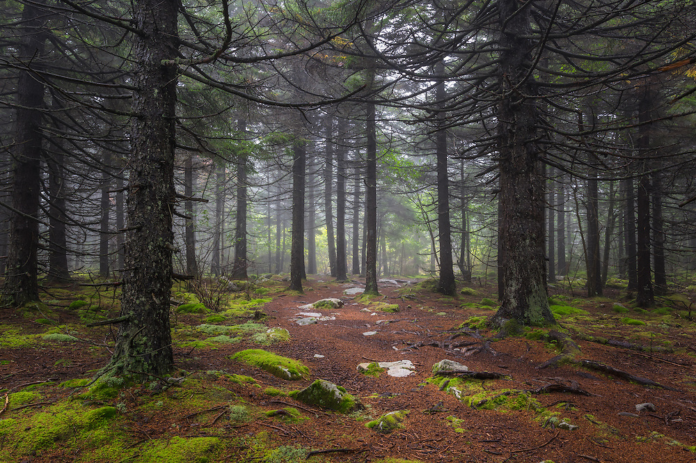 An ethereal morning fog with soft greens dappled by sunlight through the trees lend a mystical quality to the thick pine forest at the summit of Spruce Knob, West Virginia.